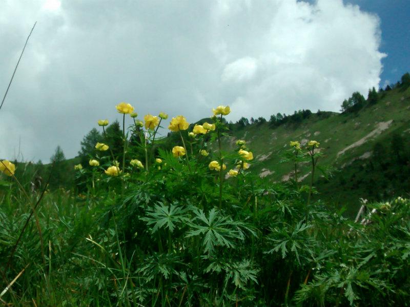 fioribetta1